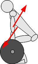 stacco da terra muscoli coinvolti - dorsale