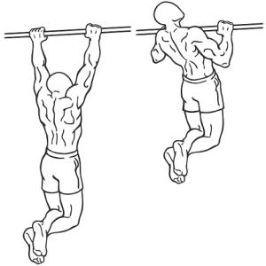 trazioni alla sbarra muscoli coinvolti