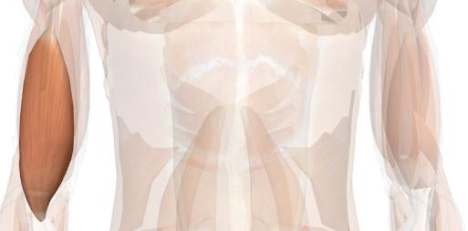 esercizi per le braccia brachiale