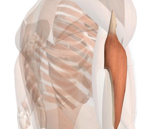 esercizi per le braccia capo laterale