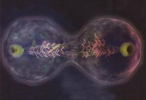 La mutazione è la chiave della nostra evoluzione. Ci ha consentito di evolverci da organismi monocellulari a specie dominante sul pianeta - Charles Xavier