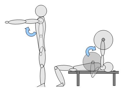 panca piana muscoli coinvolti - petto