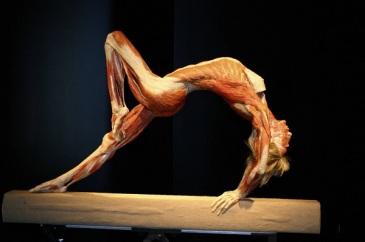 body-worlds-mostra-cadaveri-roma-1
